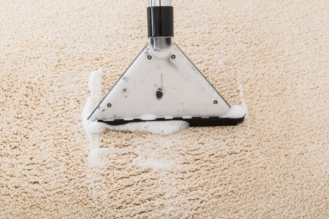 rug cleaning springfield ma